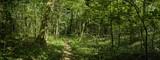 Trampelpfad im dichten Wald Panorama
