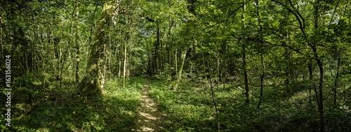 In de dag Weg in bos Trampelpfad im dichten Wald Panorama