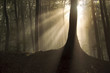 sun rays in the morning in forest landscape