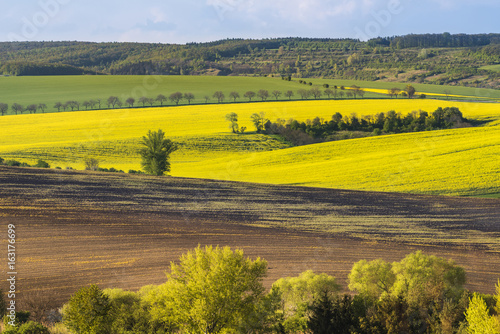 Wavy fields in the evening on South Moravia