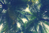 Tropical palm tree leaf background - 163222028
