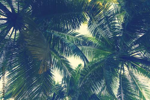 Fototapeta Tropical palm tree leaf background