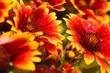 muticolor summrtime flowers