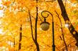 Autumn park landscape - orange autumn trees and metal lantern on the background of yellowed autumn leaves