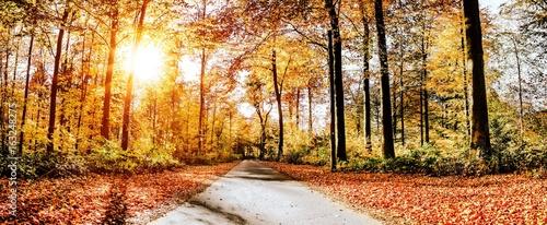 Straße im Herbst/Waldweg an sonnigem Herbsttag - 163248275