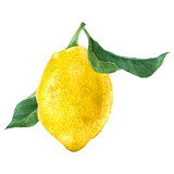 Watercolor lemon fruit - 163257413