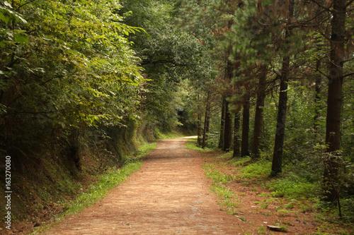 Foto op Canvas Weg in bos Senderismo