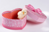 Little baby chicken in the heart shaped box isolated over white