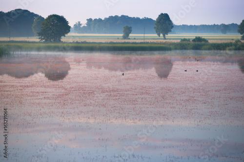 Letni poranek nad wodą
