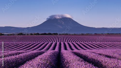 Keuken foto achterwand Lavendel paysage e lavande à Valensole