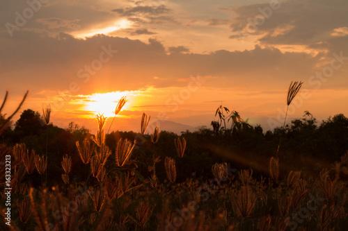 Fototapeta Grass in the sunshine