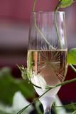 Glass of white wine - 163335096
