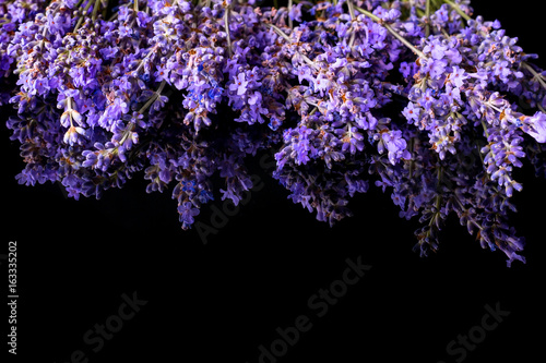 Aluminium Lavendel Bunch of wild mountain lavender flowers on black background with reflection, copyspace