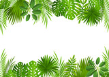 Tropical leaves background for Your design - 163342019