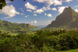 View of French Polynesia tropical vegetation - 163352863
