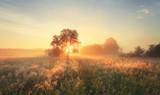 Colorful autumn sunrise on meadow