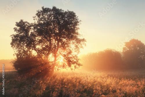 Bright sunbeams illuminate meadow