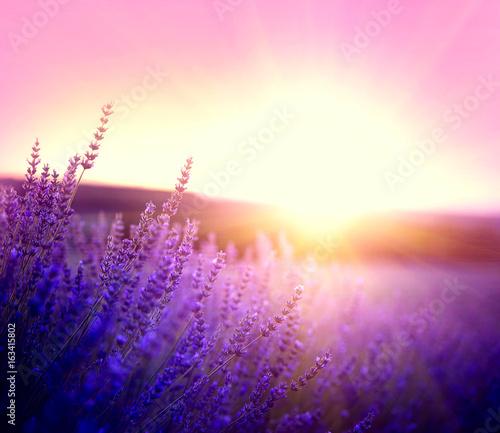 lawendowe-pole-w-prowansji-francja-kwitnace-fioletowe-pachnace-kwiaty-lawendy