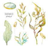 Watercolor underwater plants set. Hand drawn pond flora. Illustrations isolated on white background: water lily leaf, alga, laminaria, seaweed. - 163433080