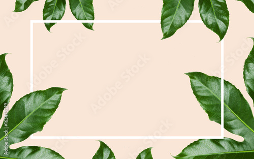 green leaves with rectangular frame over beige