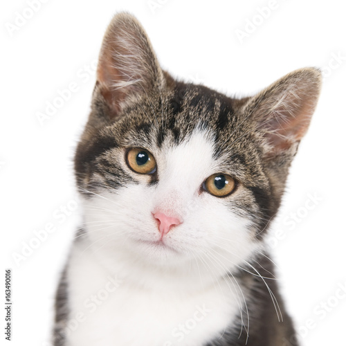 Portrait of a looking kitten against white (1x1). Selective focus on eyes and nose.