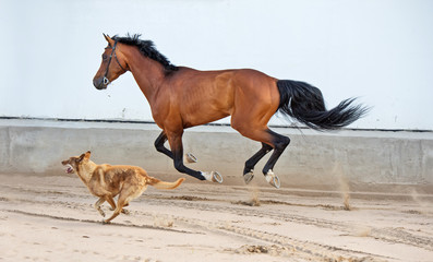 running and playing bay horse with dog