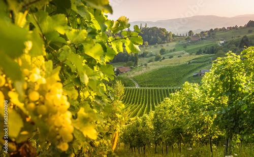 Styrian Tuscany Vineyard at summer sunset, Austria © dannywilde