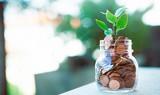 Pianta cresce nei soldi risparmiati, economia - 163531463
