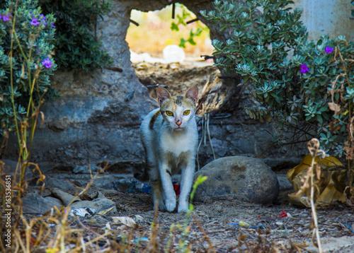Aluminium Reznik Красивая бродячая кошка, идущая на открытом воздухе