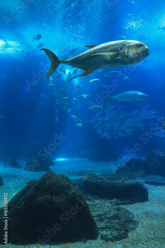 Tuinposter Koraalriffen Fish swimming in a reef with blue ocean water