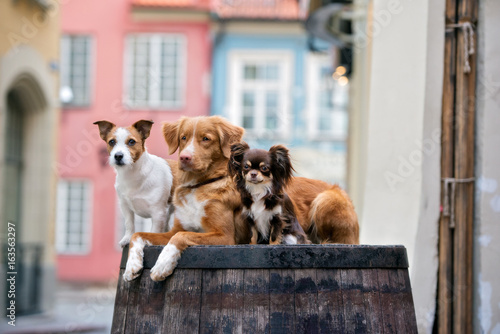 three different breed dogs posing together