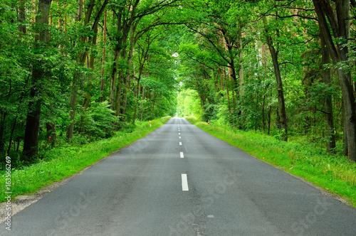 In de dag Weg in bos Droga asfaltowa wśród lasu