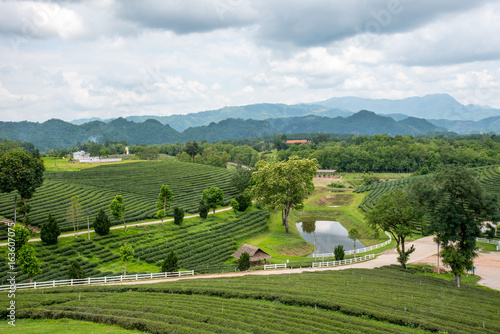 Foto op Canvas Koffie Green tea plantations, Green tea field with sky and pool