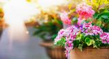 Beautiful patio flower pots on balcony in sunlight - 163627603