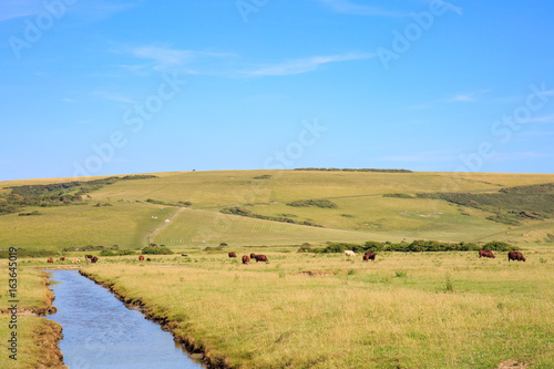 Cows at Cuckmere Haven, Sussex