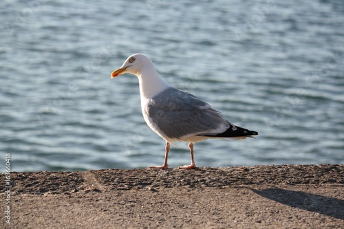 Mouette Poster