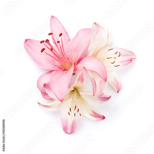 Colorful lily flowers Poster