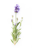 Lavender flowers. - 163703651