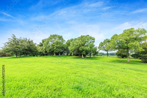 Deurstickers Lime groen Green field and blue sky