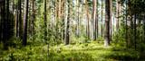 Ekologia tła na zewnątrz krajobrazu