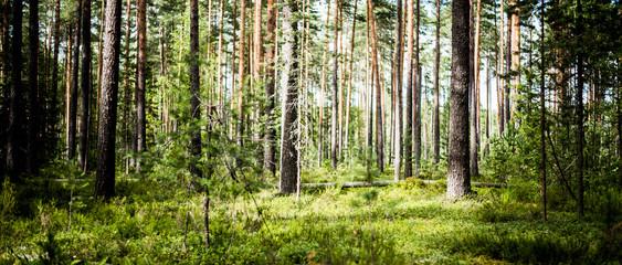 Ecology background outdoor landscape