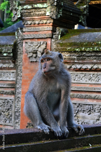 Monkey in the temple.