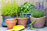 Urban gardening, frische Kräuter in Tontöpfen - 163782862