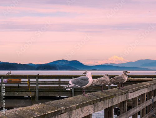 Foto op Canvas Lichtroze View on Mt. Baker from Sidney, Vancouver Island, Canada