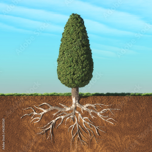 Cone tree with root.