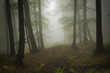 misty woods background