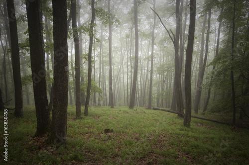 green rainy woods
