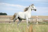 Amazing pony moving on pasturage - 163834813