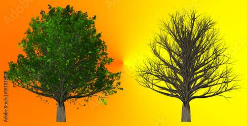 Tree isolated on abstract background, 3D Illustration