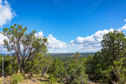 Forest in Northern Arizona